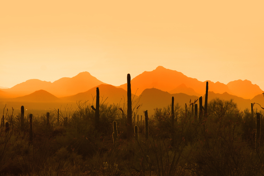 SAGUARO NATIONAL PARK -  (PHOTO: SHEHIT/SHUTTERSTOCK)