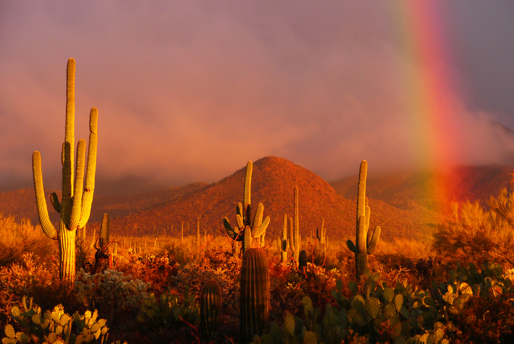 RAINBOW SUNSET AT SAGUARO NATIONAL PARK - (PHOTO: CECILIA LIM H M/SHUTTERSTOCK)