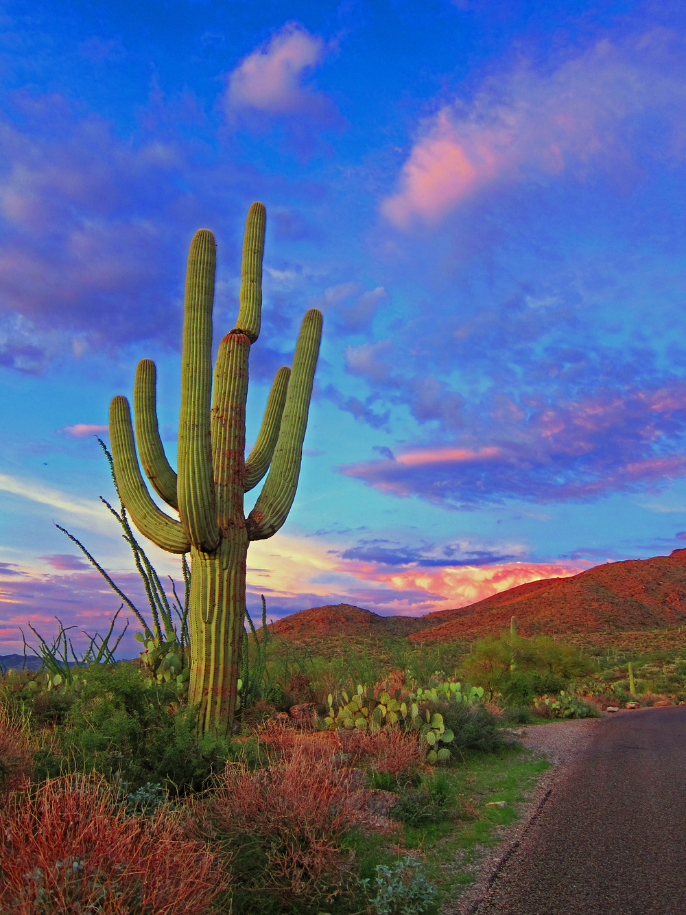 VIVID ROADSIDE CACTUS SUNSET - (PHOTO: CVM/SHUTTERSTOCK)
