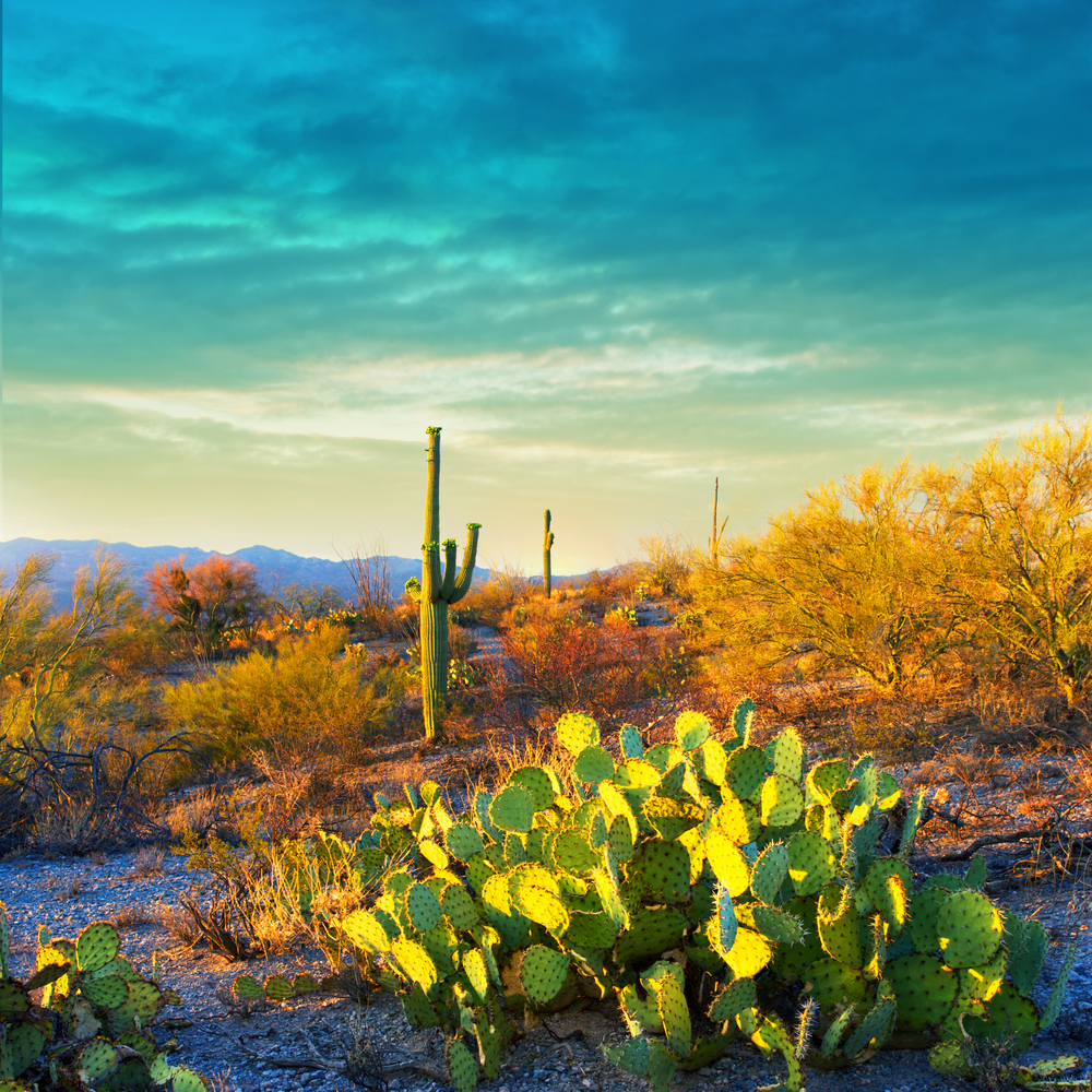 SERENE SAGUARO SUNSET - (PHOTO: KATRINA LEIGH/SHUTTERSTOCK)