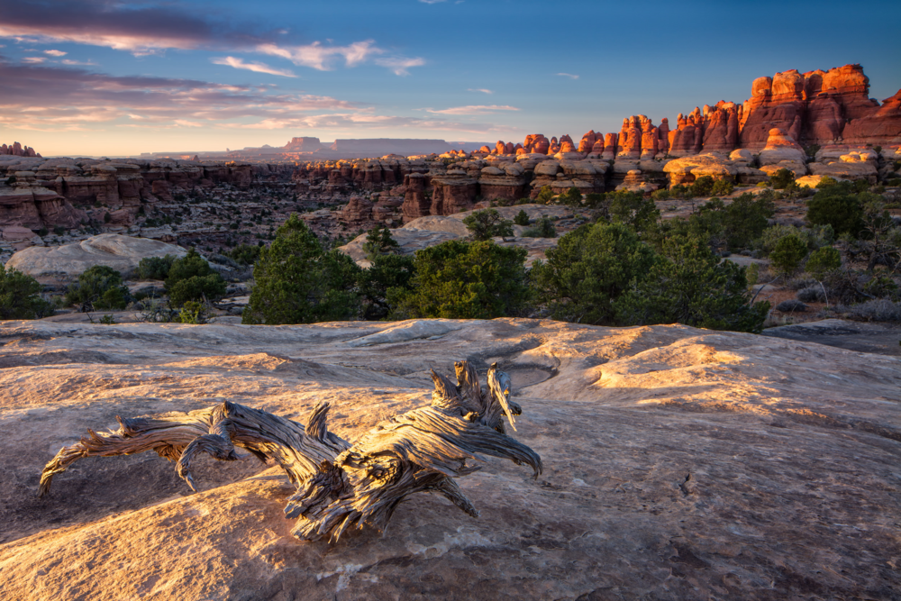 CHESLER PARK - NEEDLES DISTRICT –  (PHOTO: ERIK HARRISON/SHUTTERSTOCK)