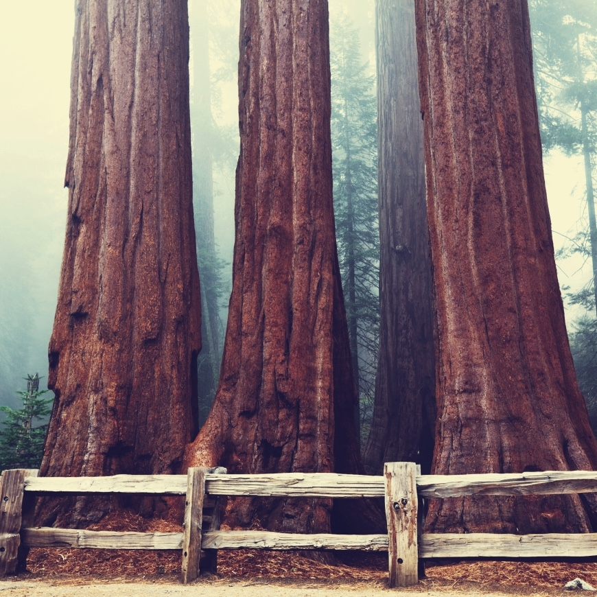 Sequoia + Kings Canyon National Park