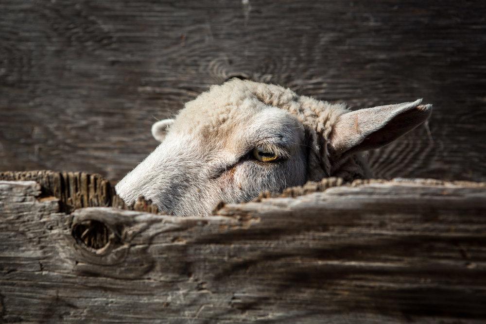 wool-11.jpg