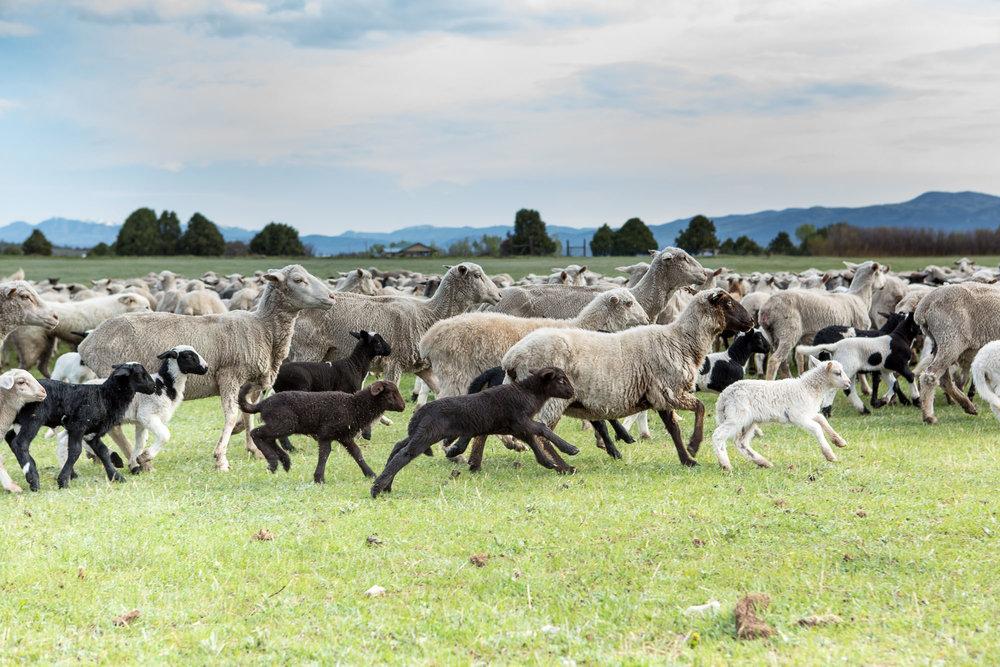 wool-16.jpg