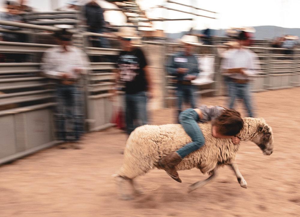rodeo_portfolio_preview-22.jpg