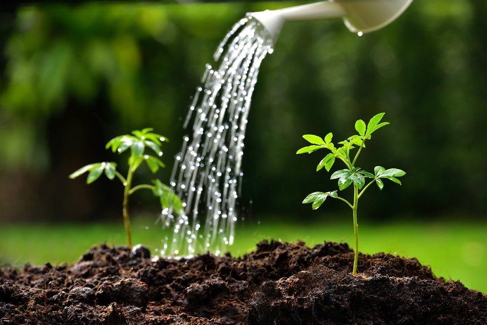 planting the gospel.jpg