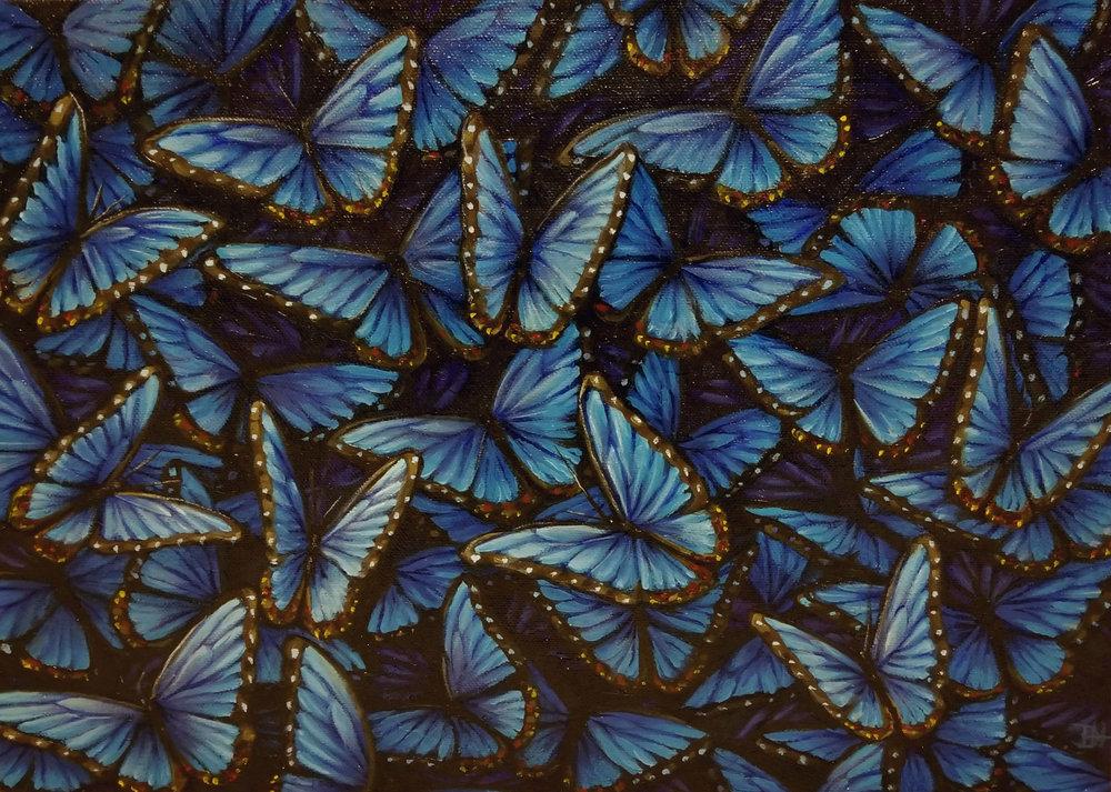bluemorpho.jpg