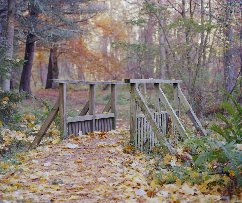 Forest-3-15.jpg