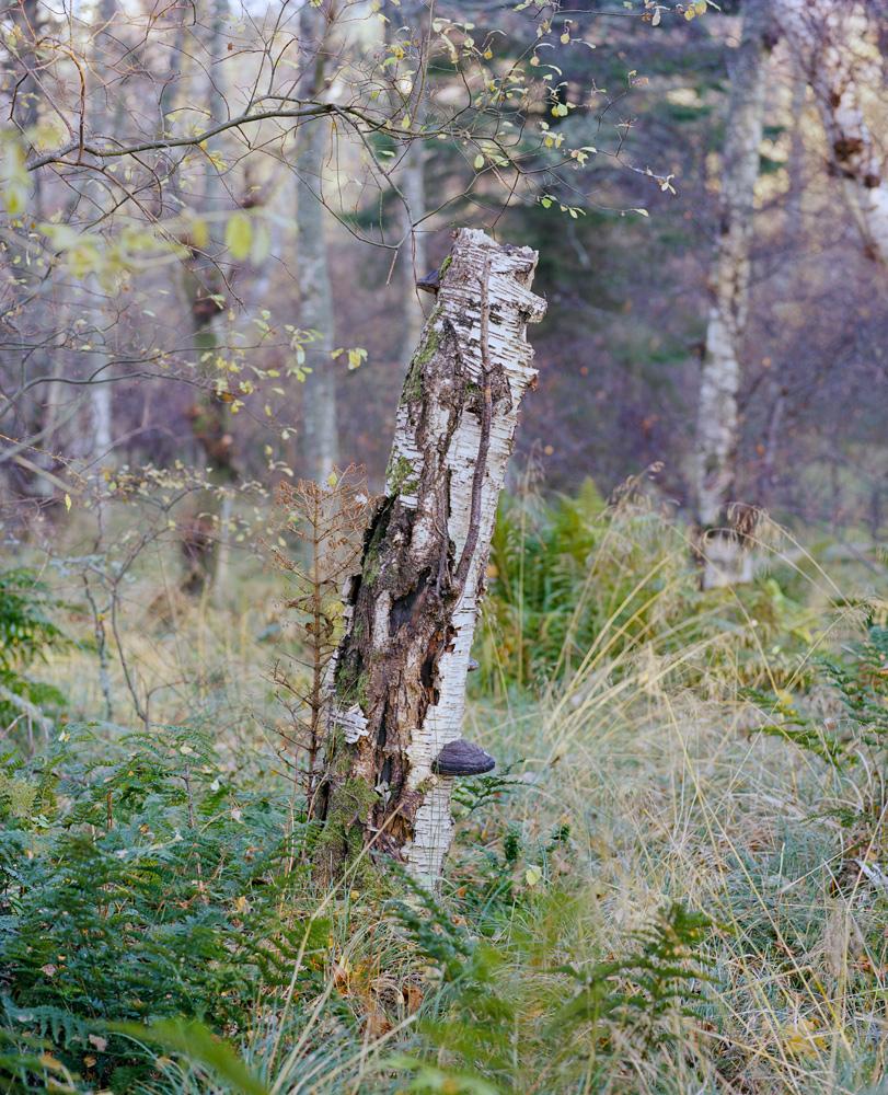Forest-4-14.jpg