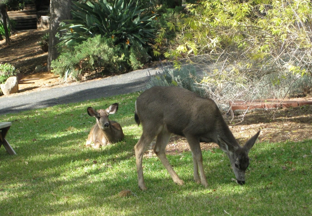 The wildlife population in Los Angeles is in crisis. Every day, Citizens for Los Angeles Wildlife (CLAW) receive reports of wildlife injuries and deaths as a direct result of ongoing overdevelopment blocking ancient migratory passageways. CLAW, Councilmember Paul Koretz and the Santa Monica Mountains Conservancy have now partnered to protect wildlife corridors throughout our hillsides.  Want to find out how you can help?  Click here.