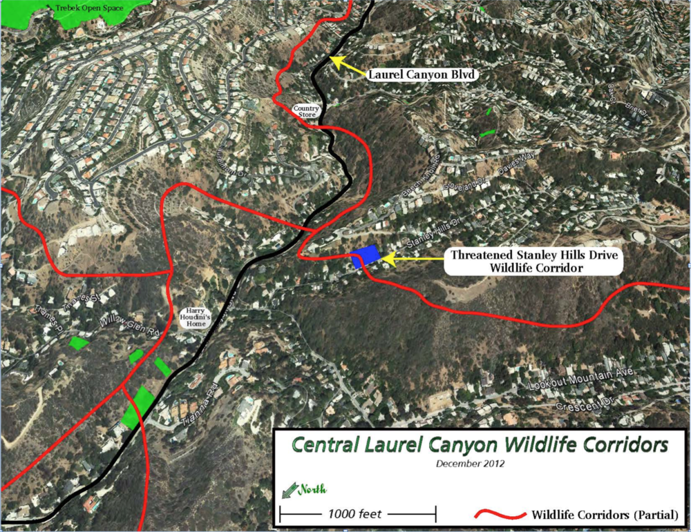 Here is an example of how one building project can literally sever an existing wildlife corridor and threaten its wildlife populations.  The red lines represent some of the few remaining wildlife corridors in Laurel Canyon. The blue box designates a multiple home McMansion project that threatened to block a critical habitat linking corridor.
