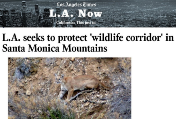 'Environmental and wildlife protection groups such as Citizens for Los Angeles Wildlife pushed Los Angeles to adopt the plan, saying it will help maintain genetic variation in urban species that might otherwise become isolated, and will reduce conflict with humans by preventing animals from being confined in residential neighborhoods.""
