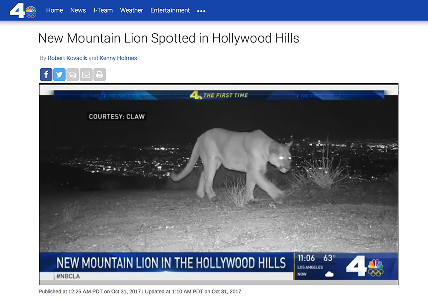 NBC reports on an uncollared mountain lion being photographed by CLAW's nature cam on the Let's Buy A Mountain land.