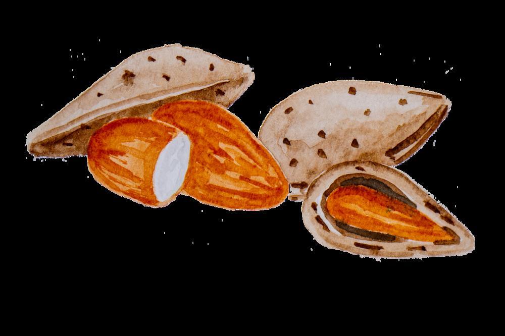 amendoa.png