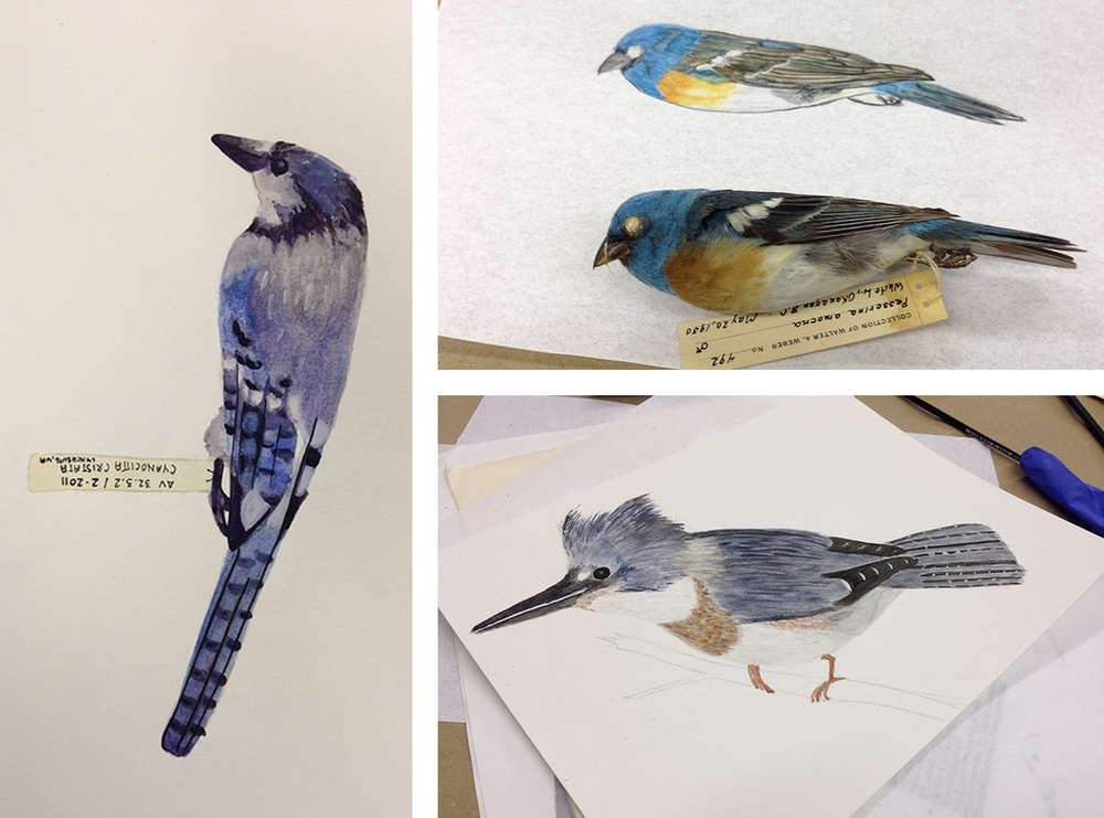 The other finished birds from the class.