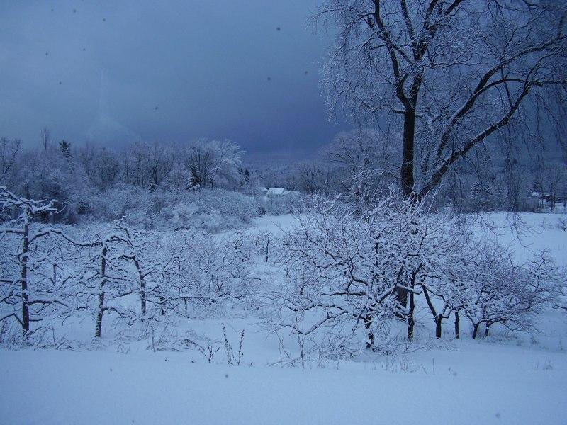winterorchard.jpg