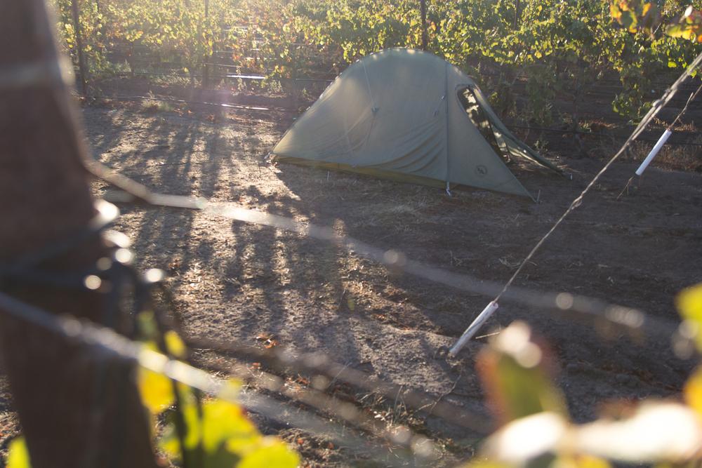 tent_morning.jpg