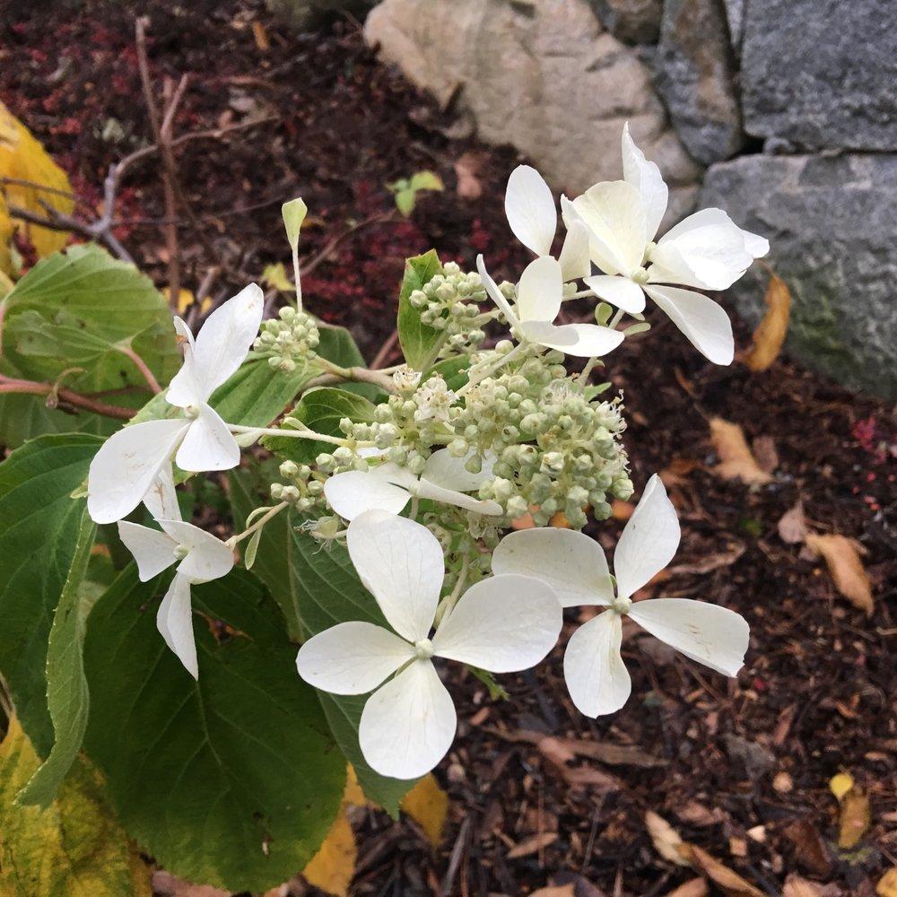 madeon23rd.kubota.flowers.jpg