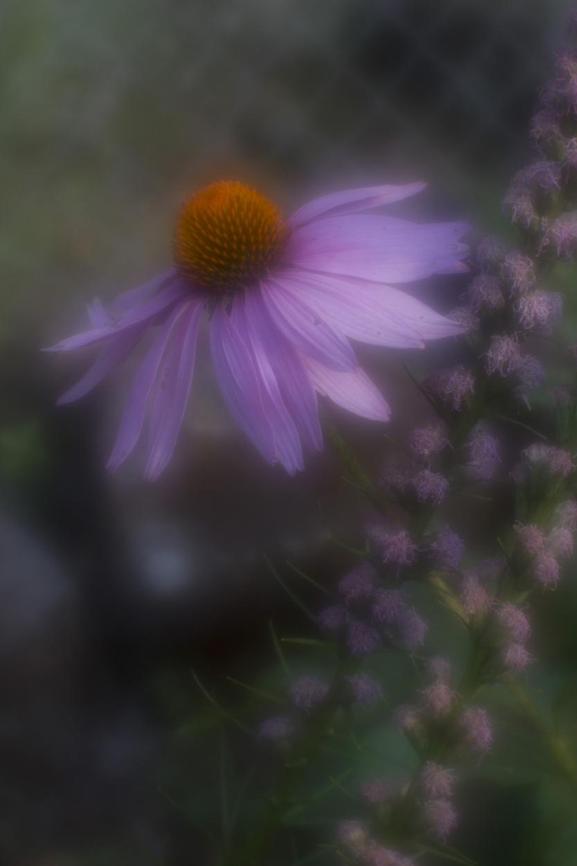 Photo #7 Flowers.jpg
