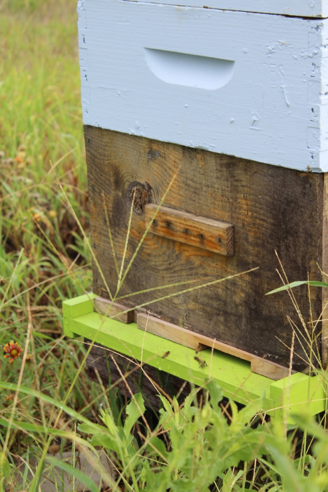 Apiary for pollination and honey
