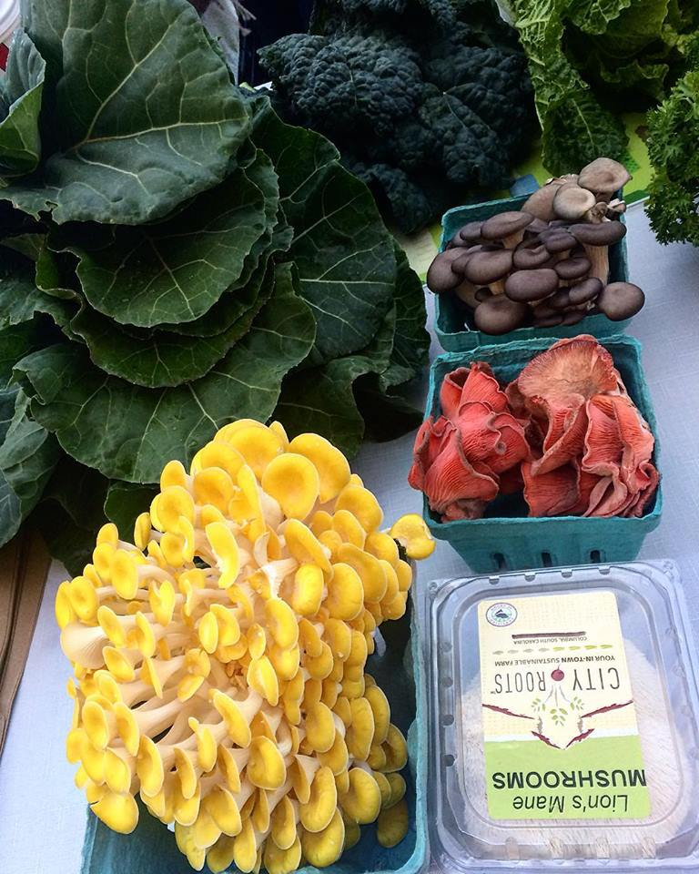 Interested in a more flexible CSA option?Try our Market-Style CSA! - Instead of a prepackaged share that is picked up each week at the farm, a Market Style CSA provides you with the flexibility to choose the exact produce you want and the convenience to pick from our diverse spread at our farmers markets each week. MARKET CSA OPTION 1You Pay: $300Your Debit Card Value: $345(Enjoy 15% discount!) MARKET CSA OPTION 2You Pay: $200Your Debit Card Value: $220(Enjoy 10% discount!)WHERE TO BUY:City Roots Farmers Market1005 Airport Blvd, Columbia, SCEvery Thursday, 4 – 7 pm   Frances Magun 0 0 2017-01-31T15:59:00Z 2017-01-31T15:59:00Z 1 46 265 2 1 310 14.0           Normal 0     false false false  EN-US JA X-NONE                                                                                                                                                                                                /* Style Definitions */ table.MsoNormalTable 	{mso-style-name: