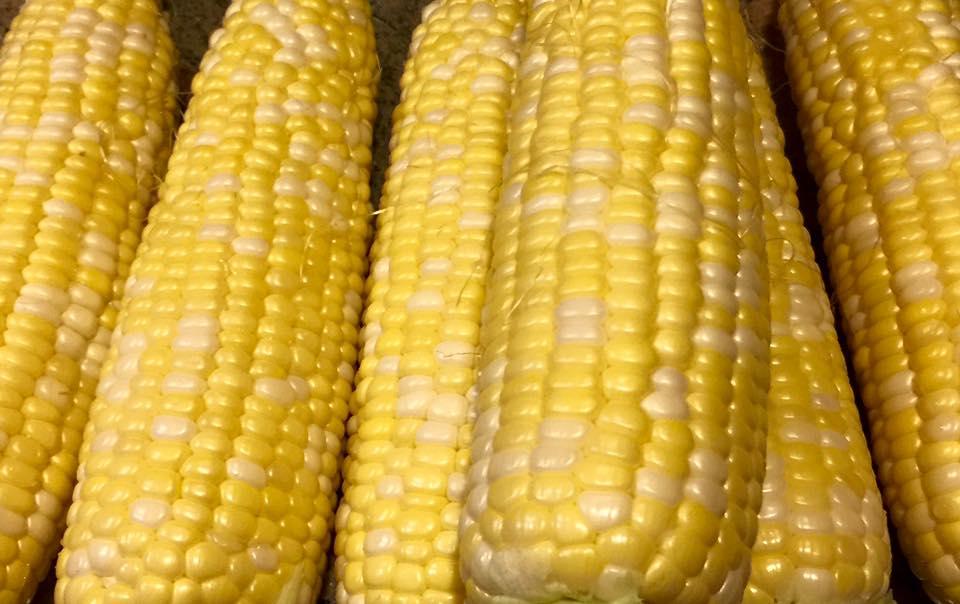 Hauser Corn Barn will be opening this Thursday, June 23rd @ 8 am. $6.00 per dozen.