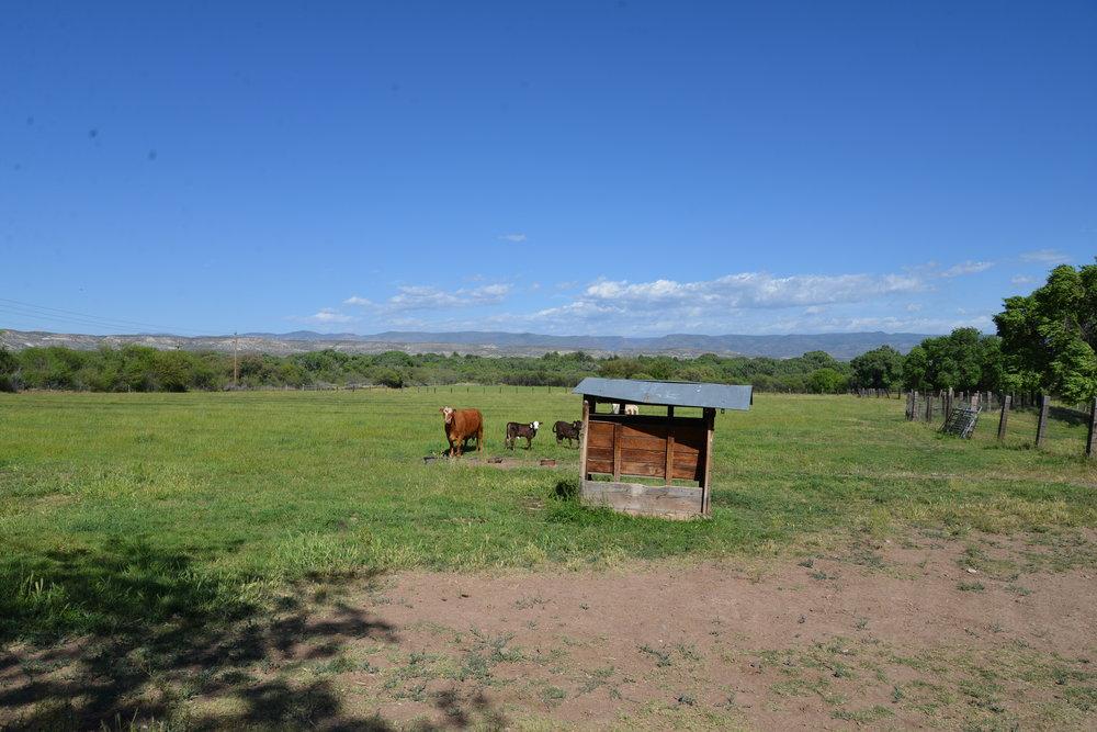 pasture 7.JPG