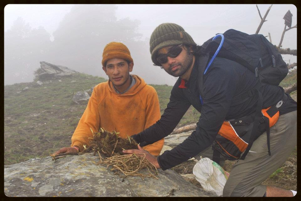 Collecting the rare Black Kutki (Picchorhiza Kurro) from Garwahl Himalayas. An excellent liver tonic useful in many disorders and cancers.  PHOTO CREDIT: DR SUMIT KESARKAR