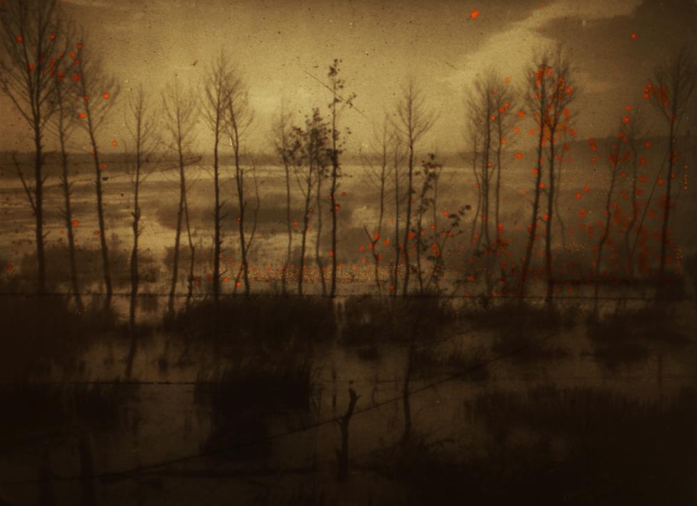 rust_trees_web.jpg