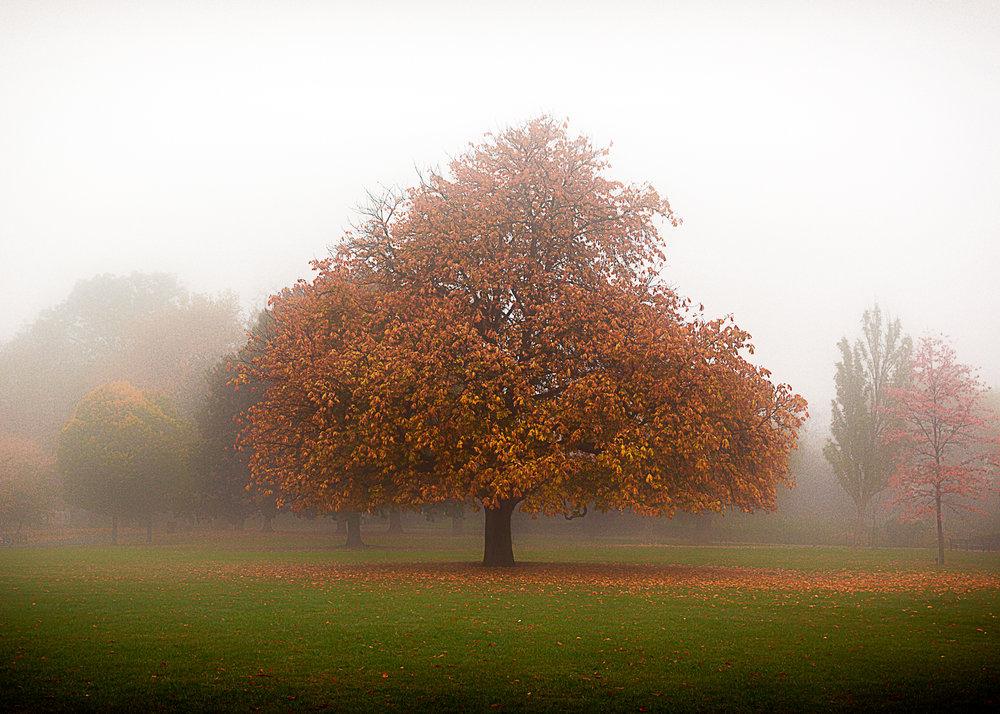 tree5x7-1.jpg