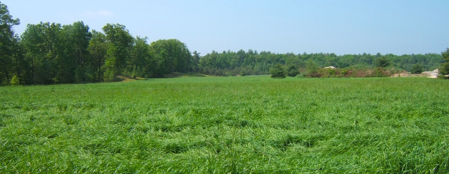 creating topsoils to restore land