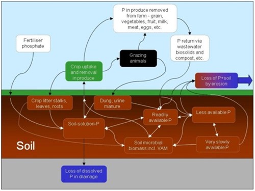 phosphorus cycle_500x375.jpg