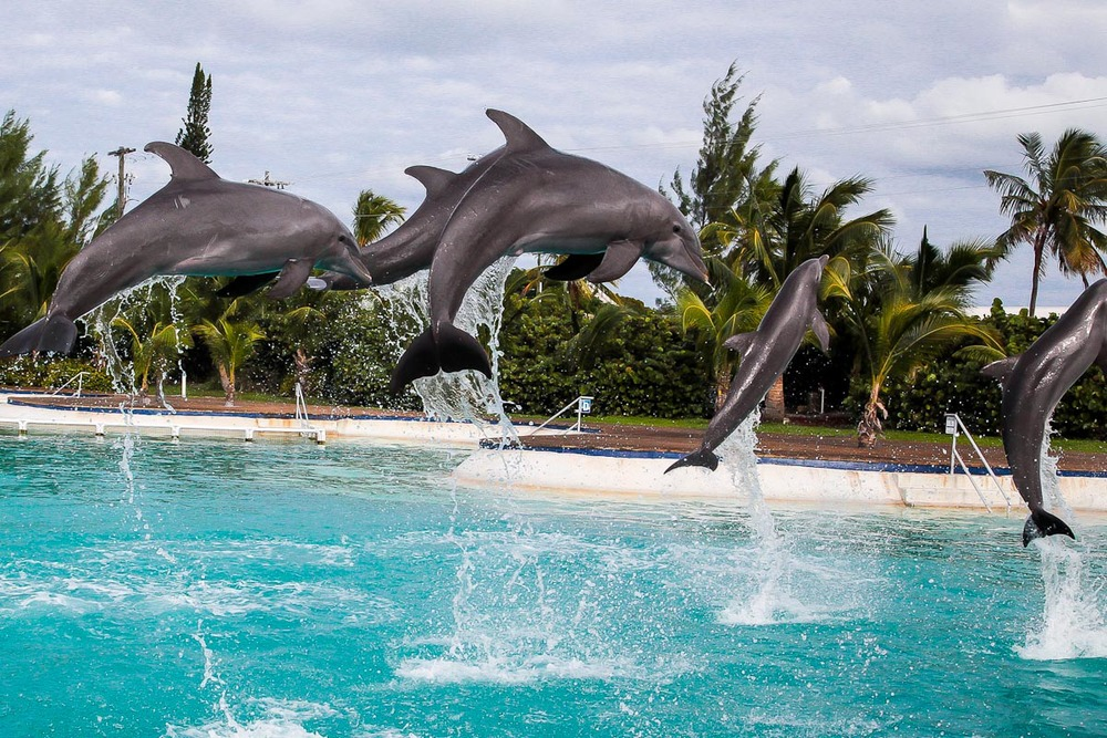Dolphin Cove, Grand Cayman | Photo Credit: Marc Dorian for Find. Eat. Drink.