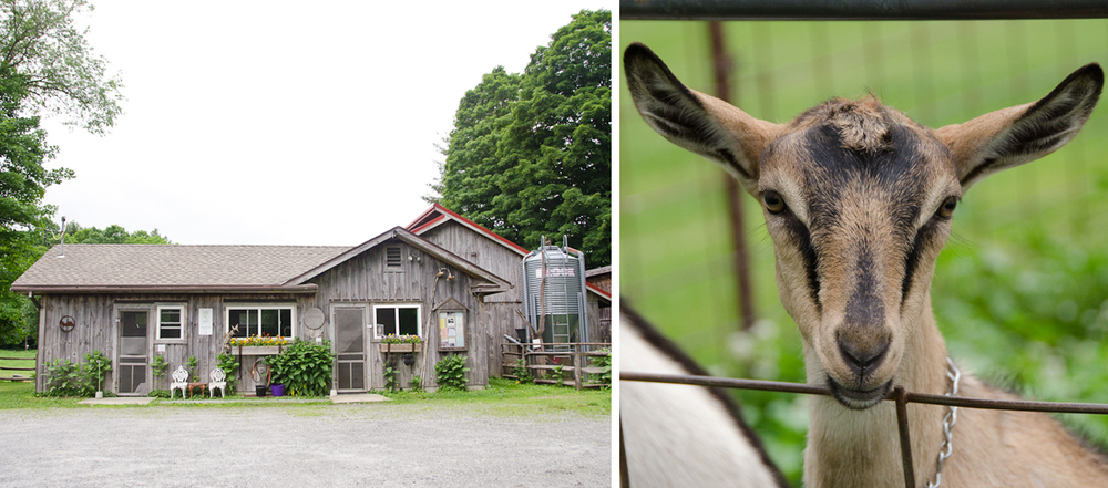 Rawson Brook Farm | The Farmhouse + A Baby Goat | Photo Credit: Find. Eat. Drink.