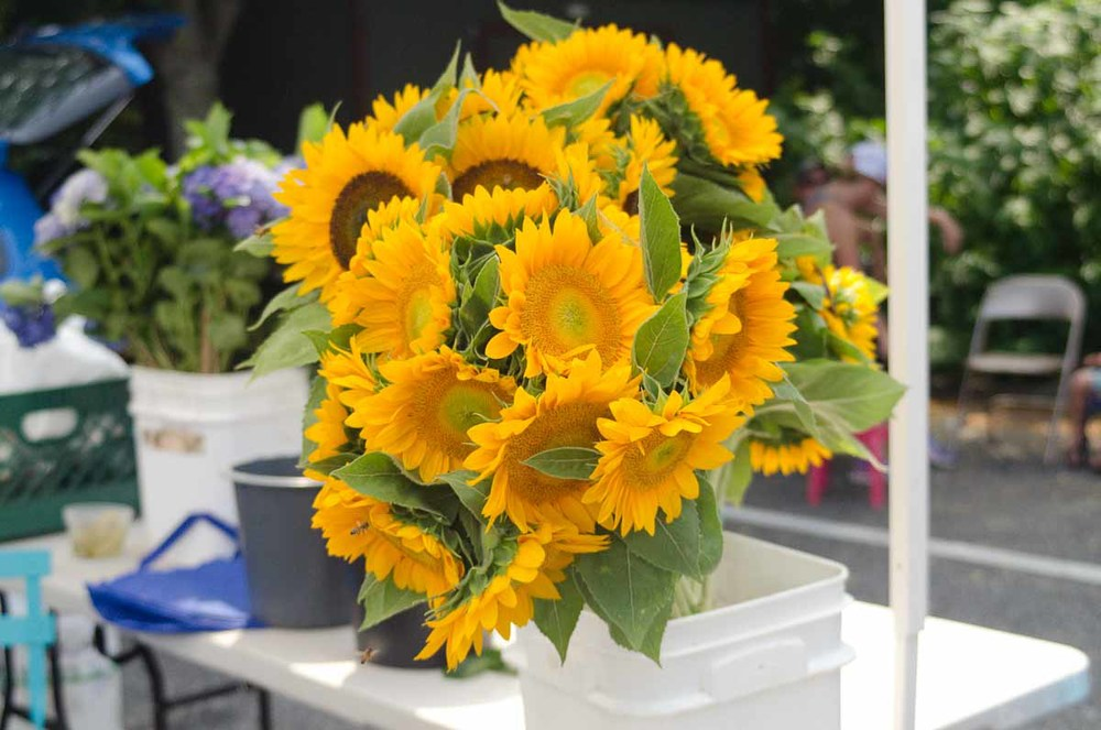 Westhampton Farmers Market | Photo Credit: Find. Eat. Drink.