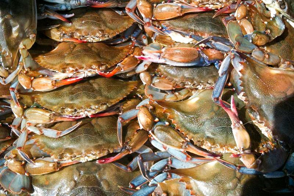 Velvet Soft Shell Crabs | Photograph courtesy of Acacia