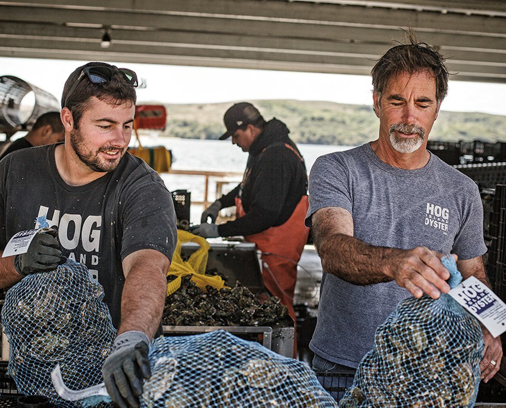 Photograph courtesy of Hog Island Oyster Co