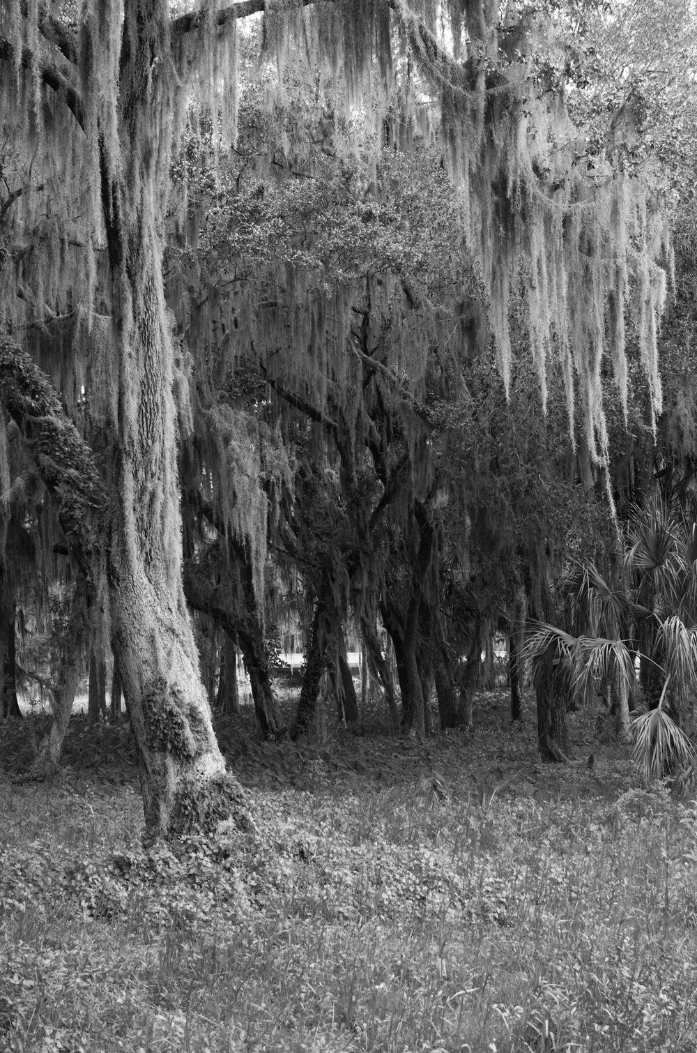 Swamp Flora III