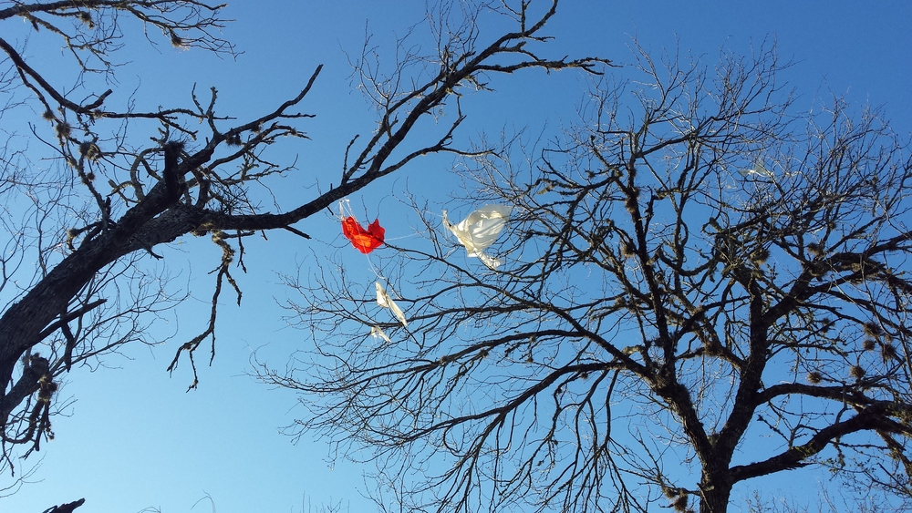 Balloon and parachute stuck in a tree