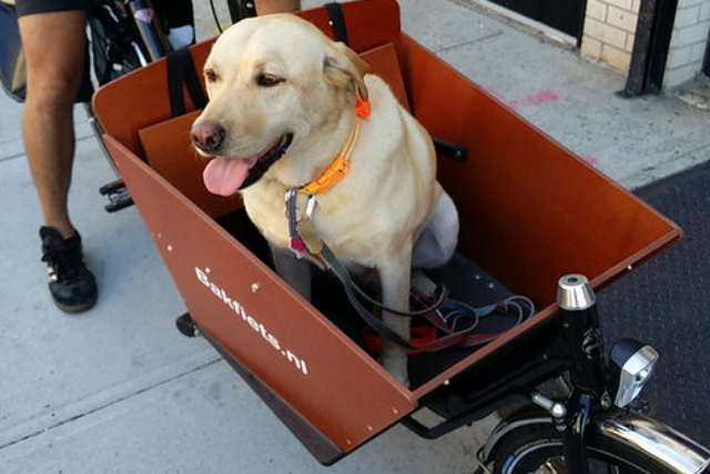 Best Selection of Cargo Bikes in NYC