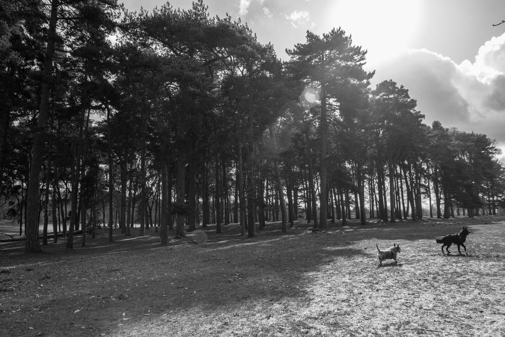 Copse in Tatton Park