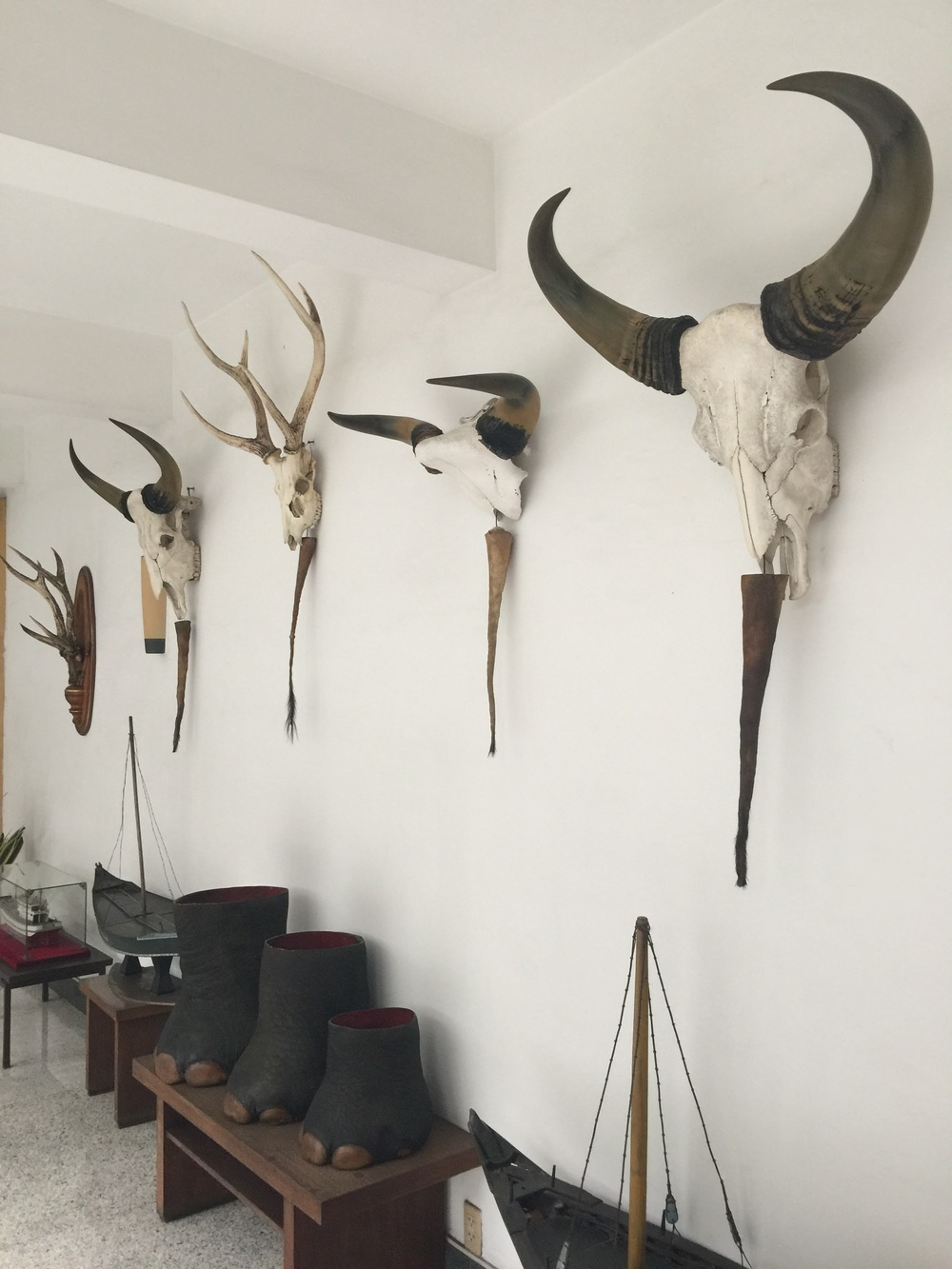past-trophies-of-vietnam-hunters