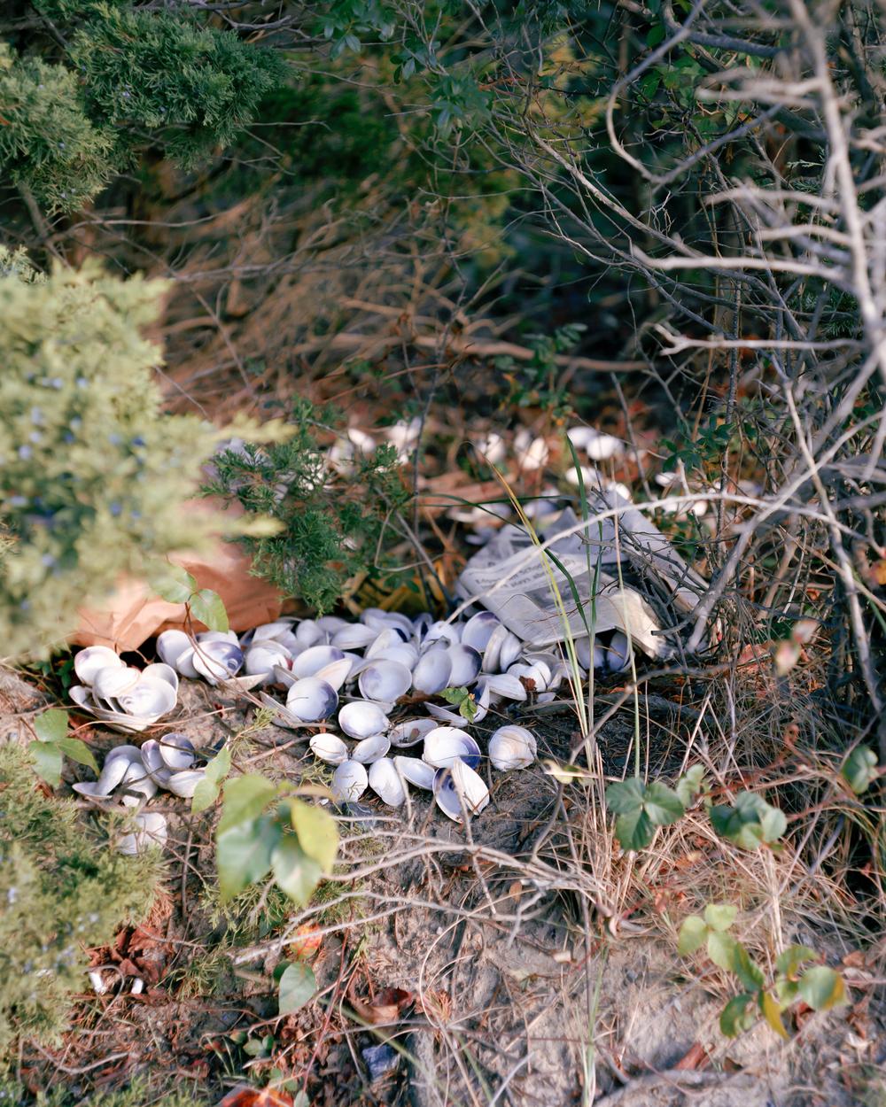 025 shells and newspaper copy.jpg