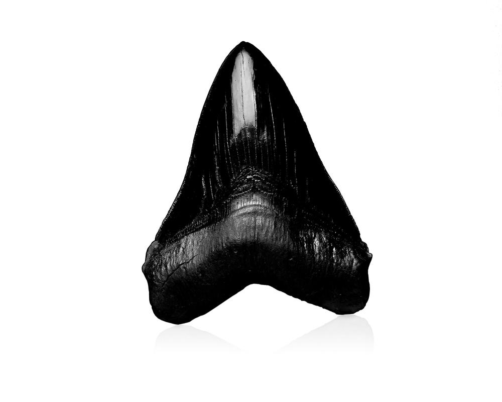 052 black tooth copy copy.jpg