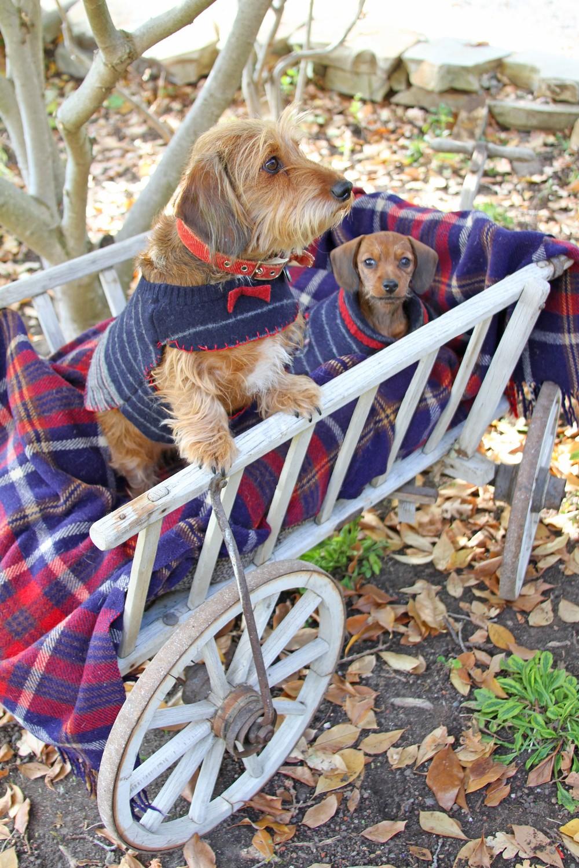 PuppySweaters.jpg
