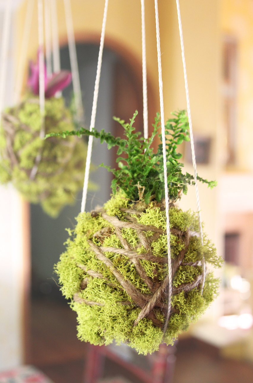 Kokedama Photo from Dena Designs