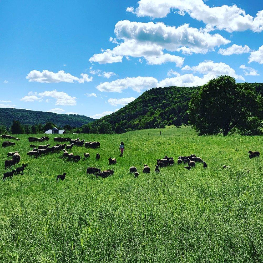 Thyme Hill Farm