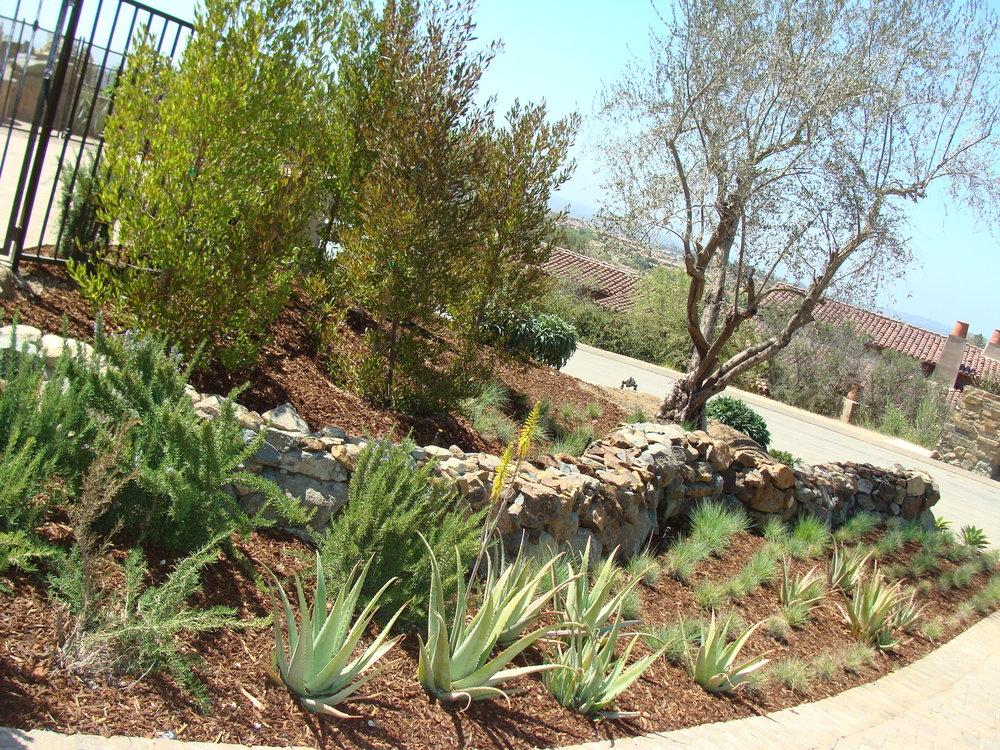 Landscaping web pics 279.JPG
