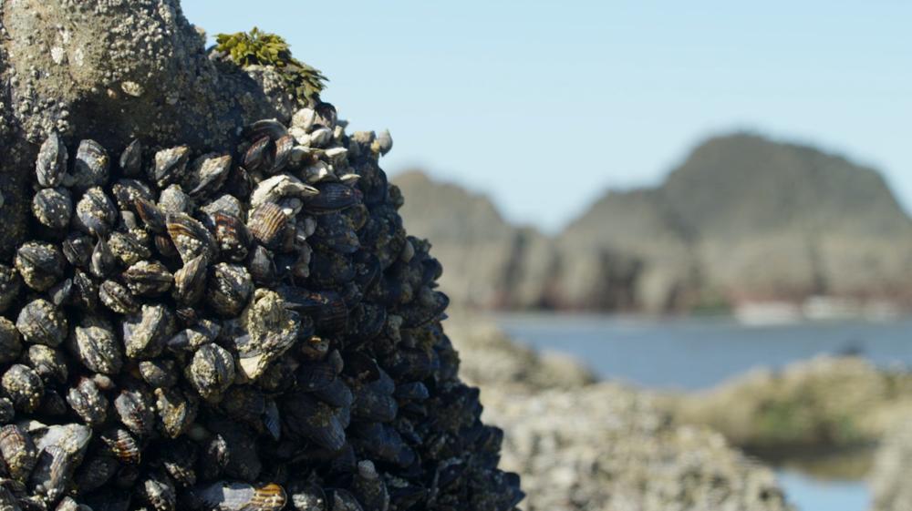 mussel-beach-2.PNG