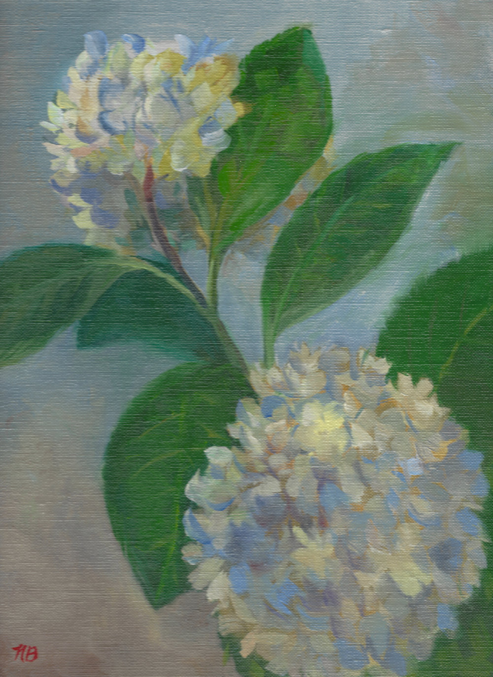 Hydrangea - oil on linen-11x14-by Nancy Boyle.jpg